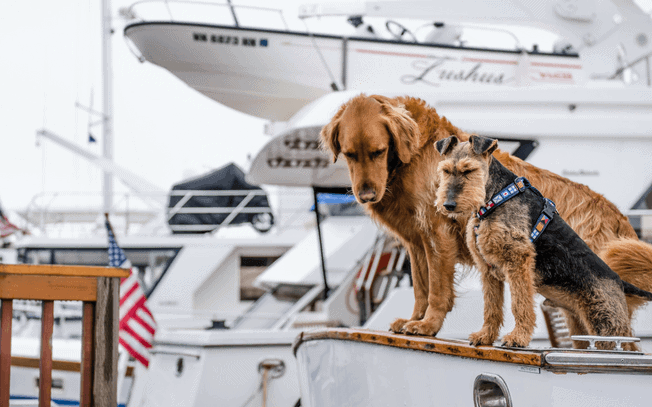 Two dogs on a boat