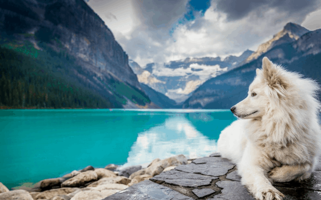 dog laying beside a lake in the mountains