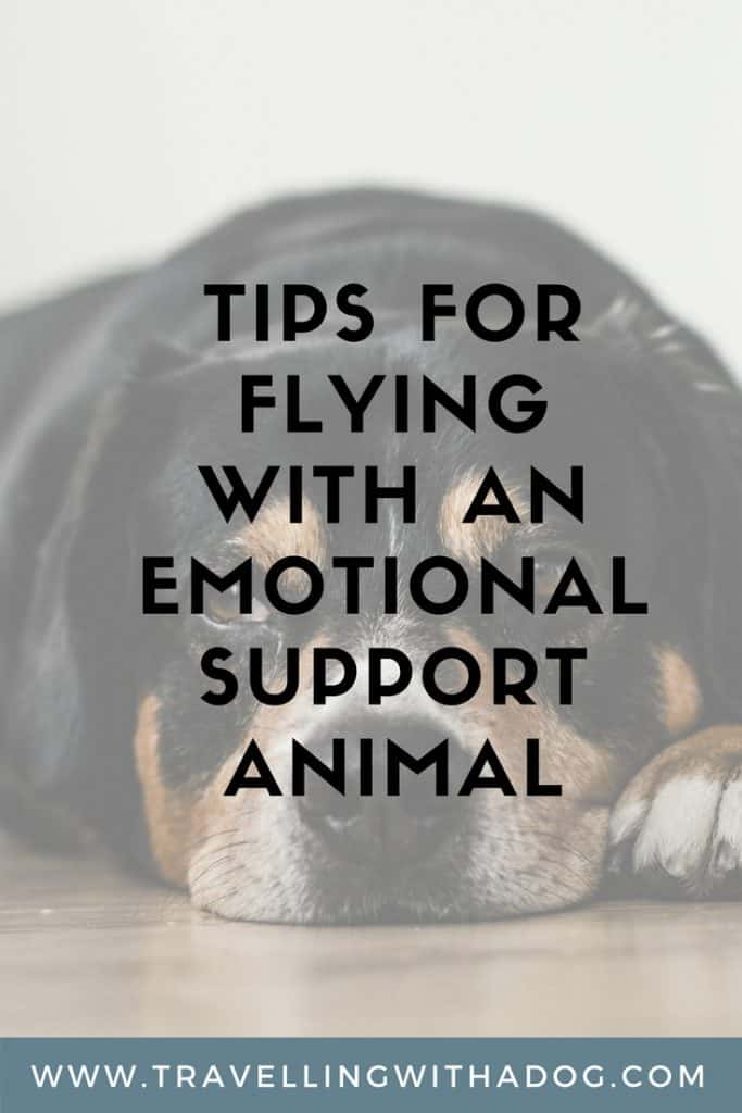image with text overlay: tips for flying with an emotional support animal