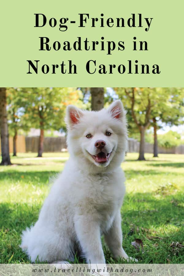 image with text overlay: dog-friendly roadtrips in north carolina