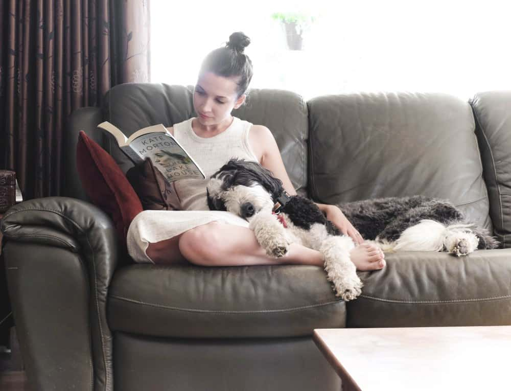 A sheepadoodle and a girl on a couch