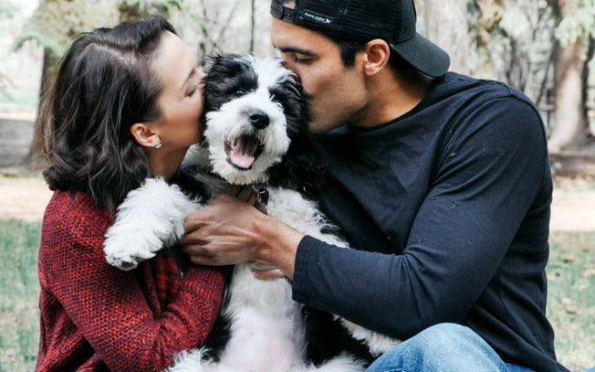 Sheepadoodle puppy being kissed