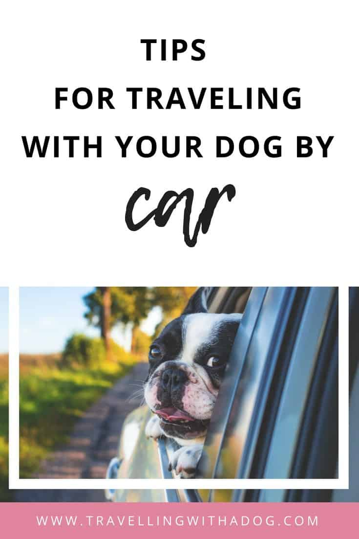 image with text overlay: tips for traveling with your dog by car