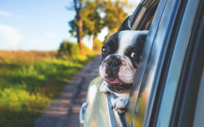 dog hanging outside car window