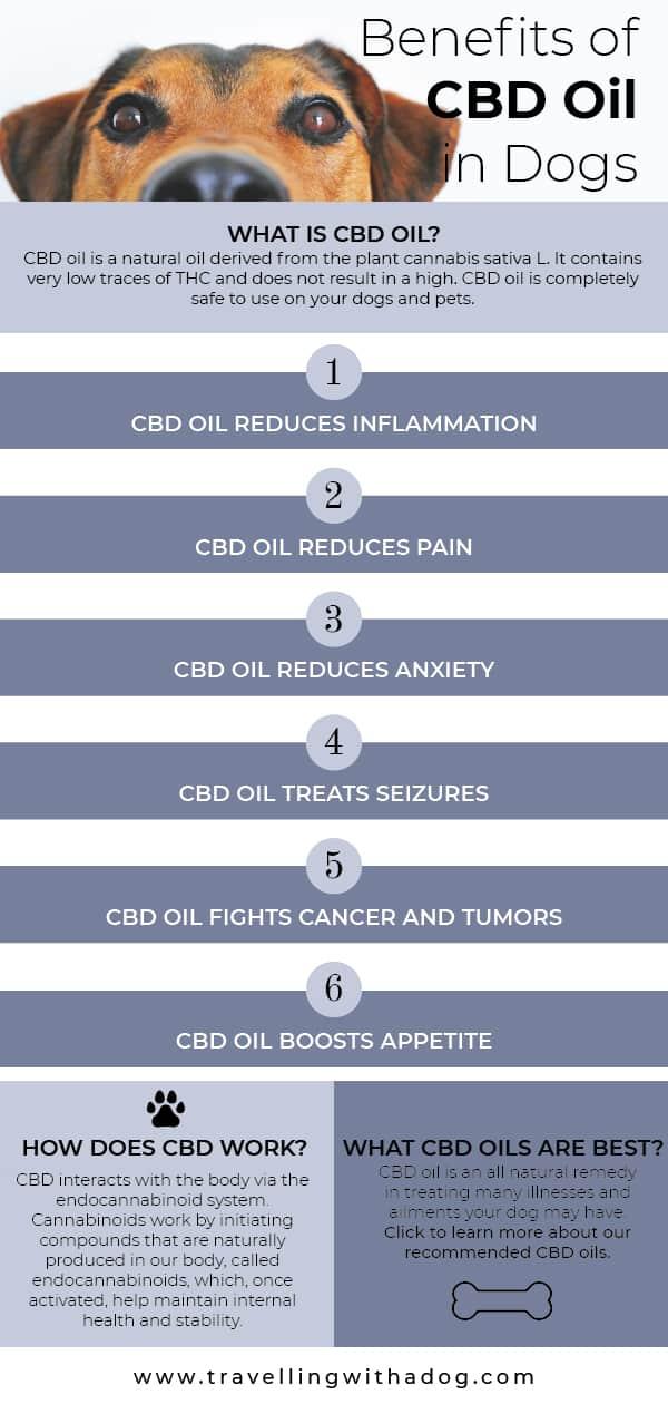 CBD oil for dog infographic