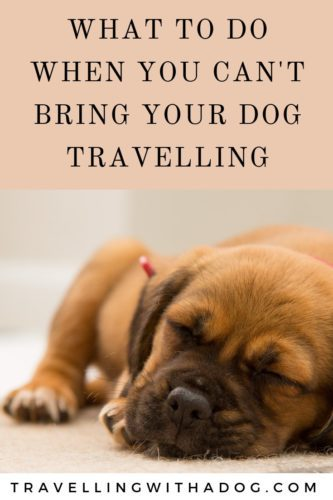 image with text overlay: wat to do when you can't bring your dog travelling