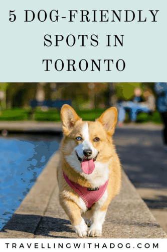 image with text overlay: 5 dog-friendly spots in toronto