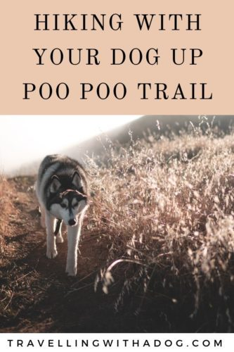 Image with text overlay: hiking with you dog up poo poo trail