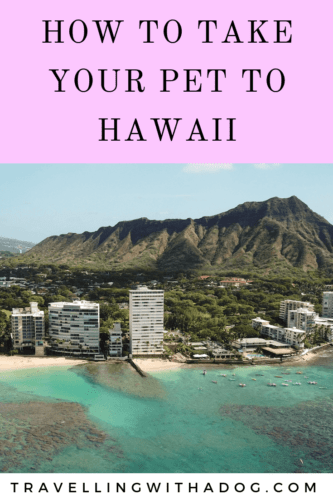 image with text overlay: how to take your pet to hawaii