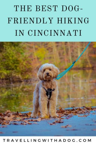 The Best Dog-Friendly Hiking in Cincinnati | Travelling With