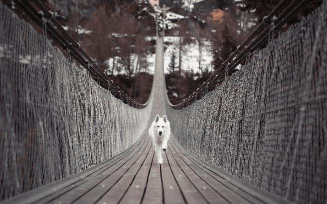 A white dog running across a bridge