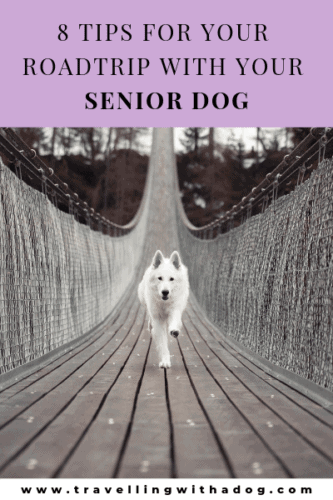 White dog running across a bridge with the text: 8 tips for your roadtrip with your senior dog