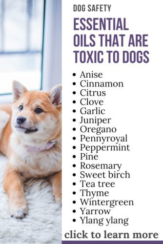 image with text overlay: essential oils that are toxic to dogs