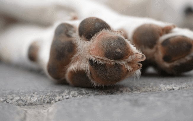two dog paws