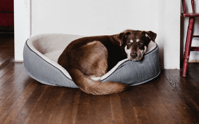 dog laying in bed inside house