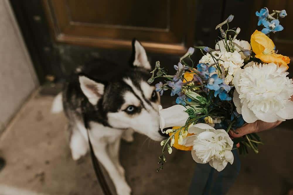 Dog looking up at wedding floral arrangement