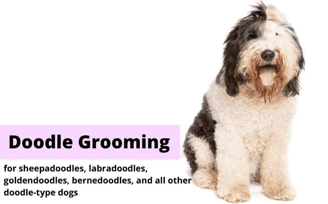 "Picture of a brown and white shaggy dog with the text ""Doodle Grooming""."