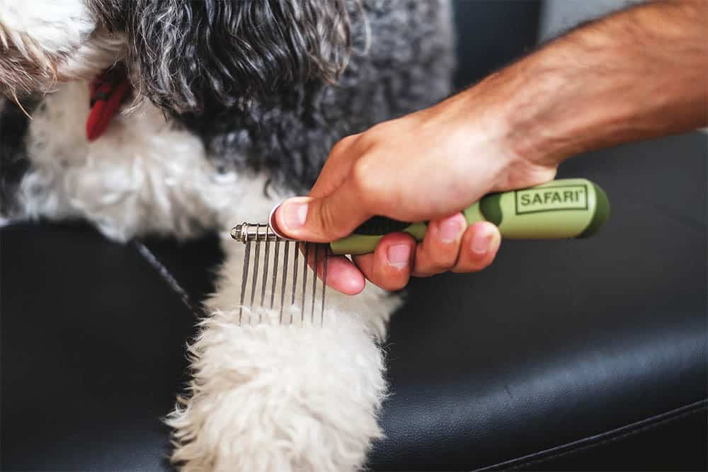 a man combing a dog's fur