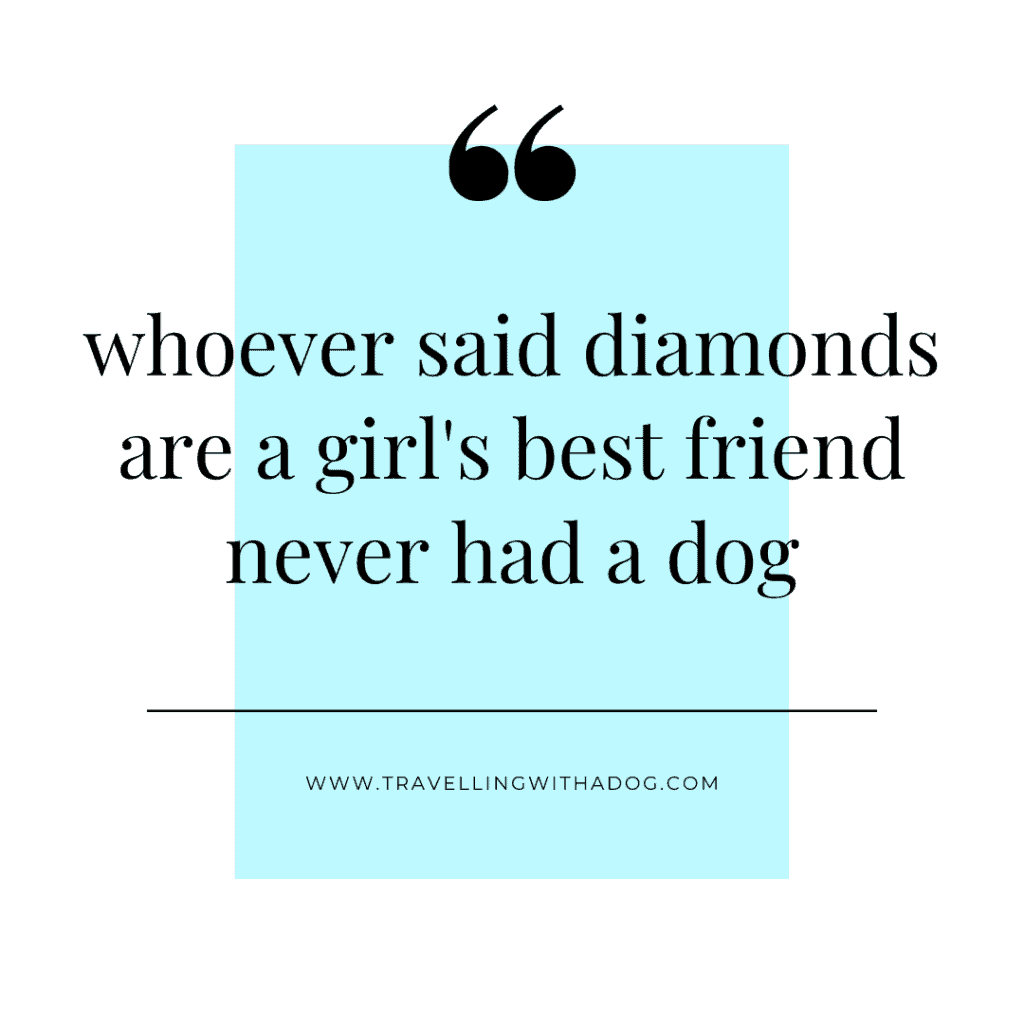 quote: whoever said diamonds are a girl's best friend never had a dog