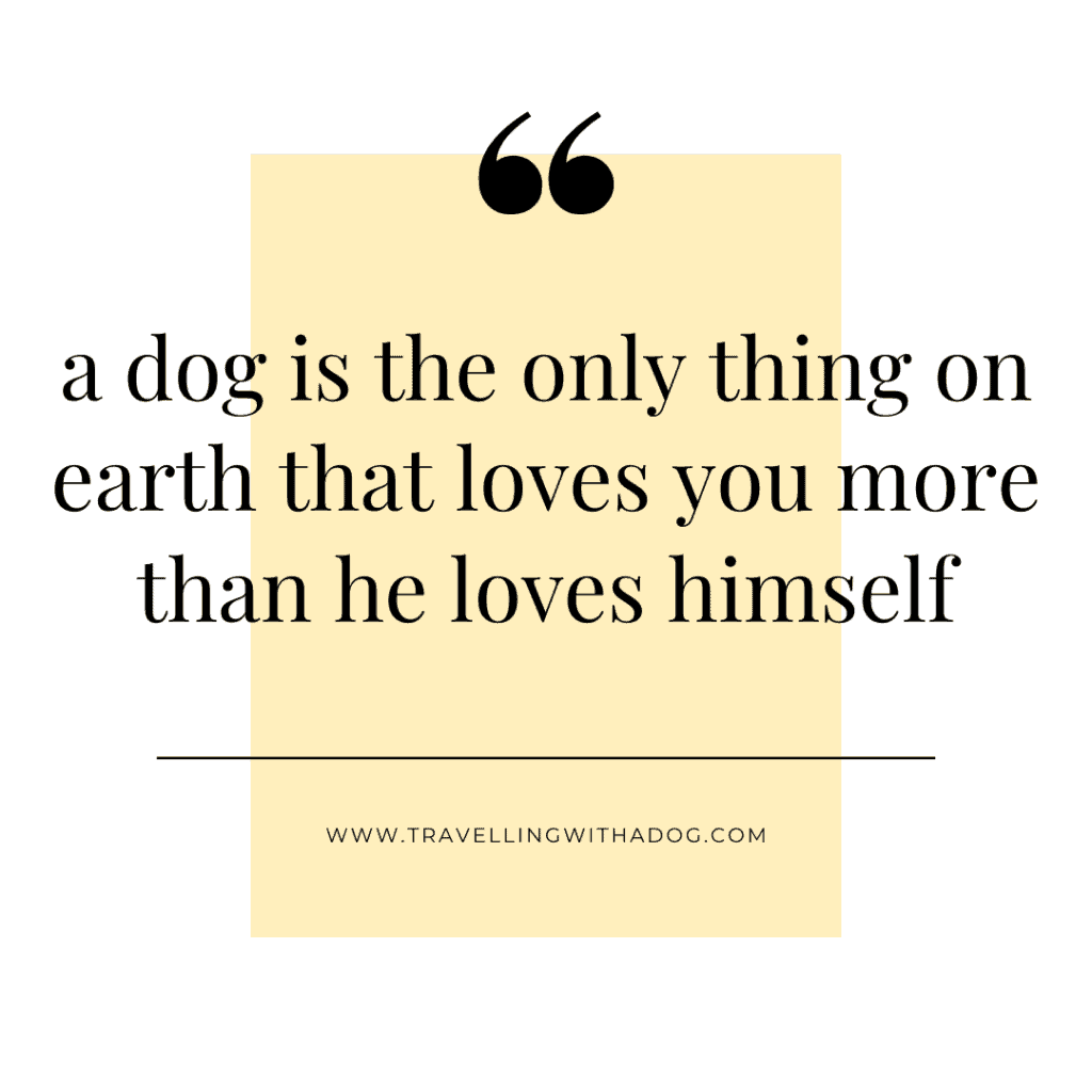 quote: a dog is the only thing on earth that loves you more than he loves himself