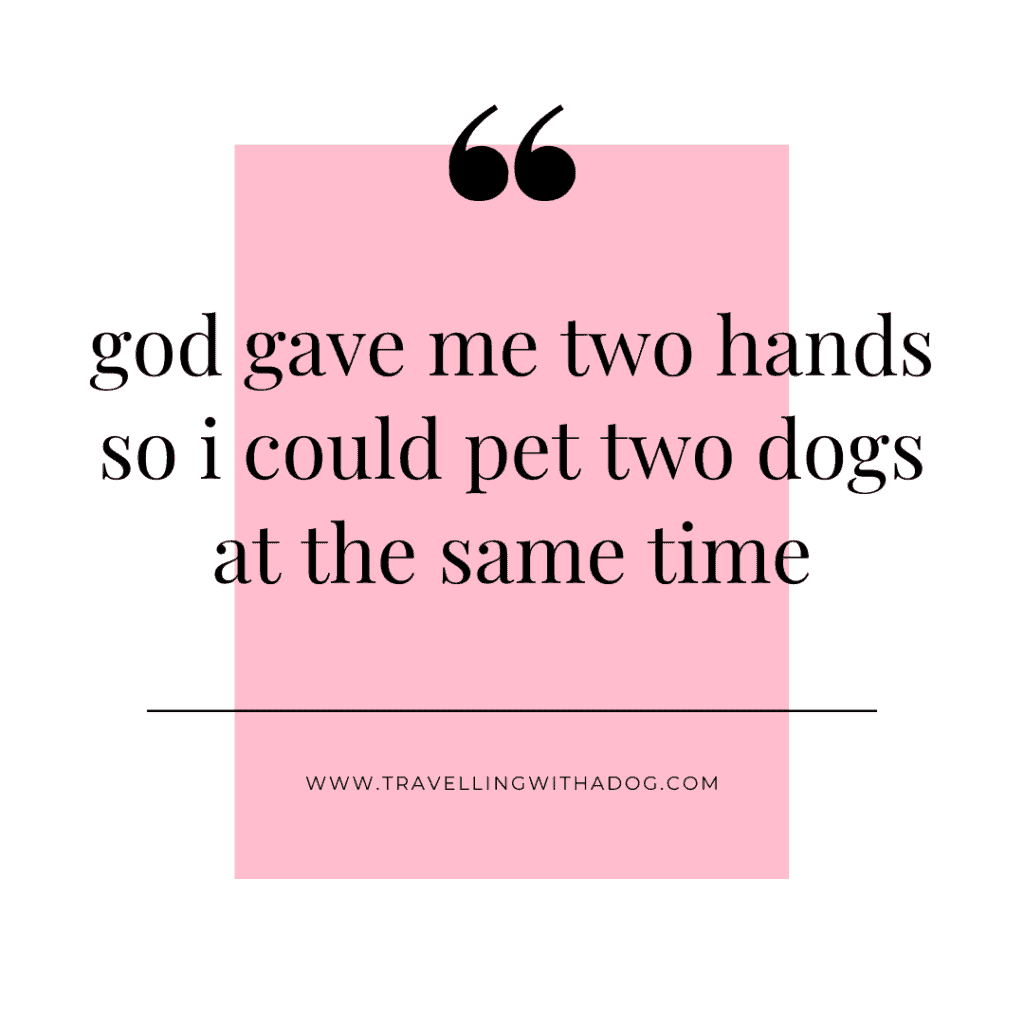 quote: god gave me two hands so i could pet two dogs at the same time