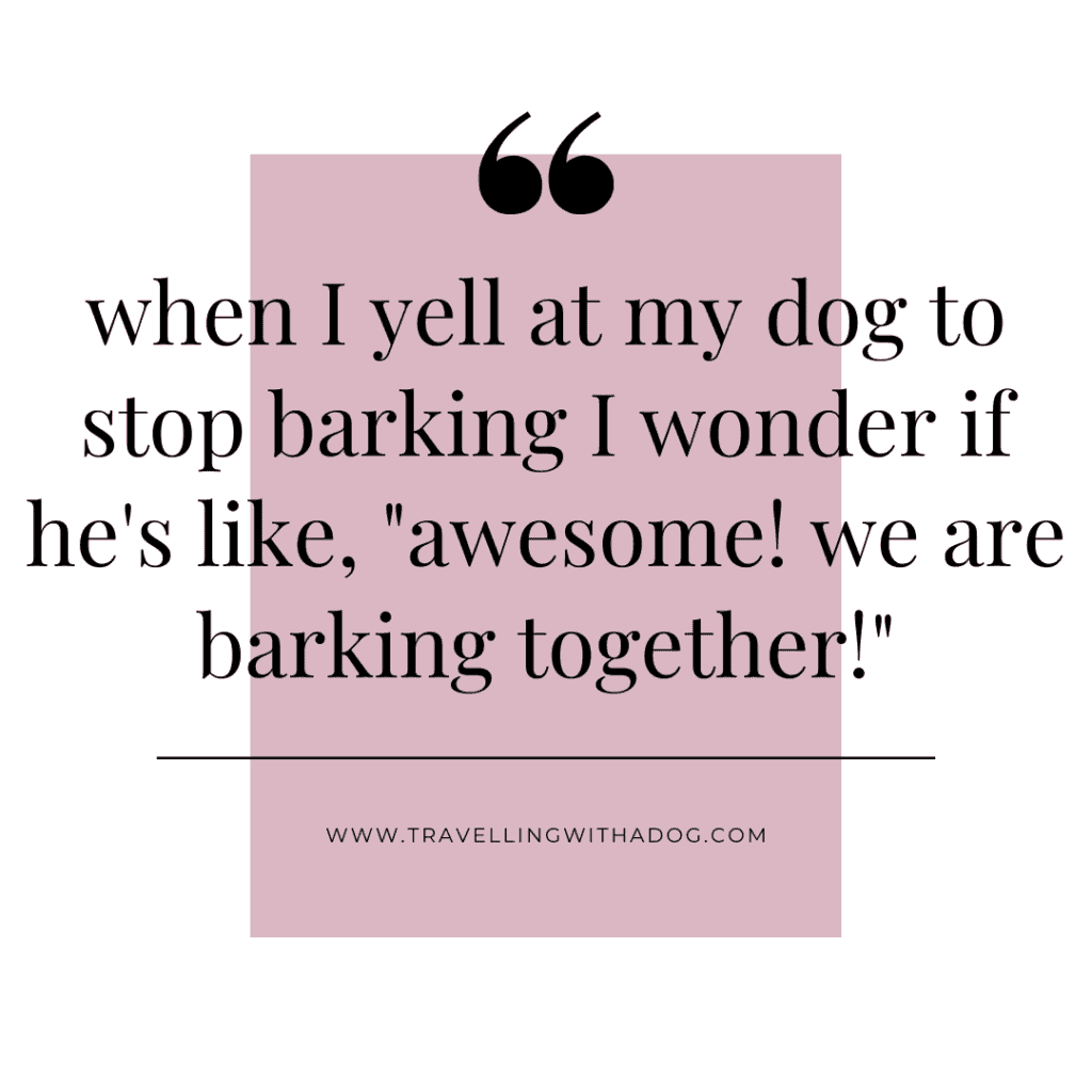 quote graphic: when I yell at my dog to stop barking i wonder if he's like awesome, we are barking together
