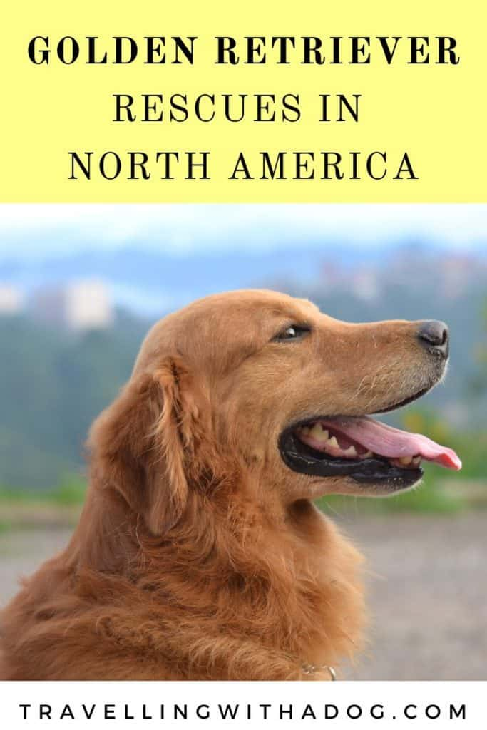 image with text overlay: golden retriever rescues in north america