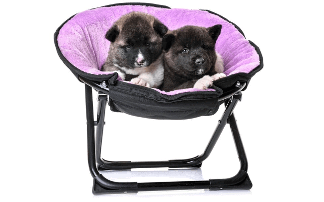 two dogs laying in a purple dog bed