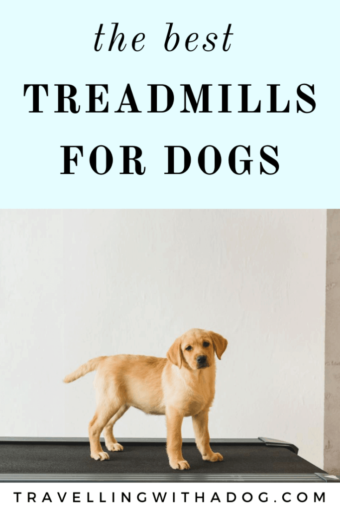 Image of dog standing on a treadmill with text that says: the best treadmills for dogs
