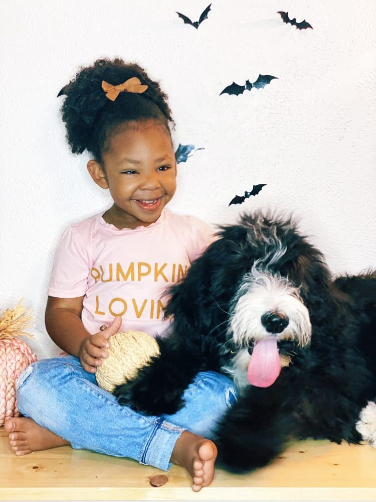Sheepadoodle and little girl sitting together