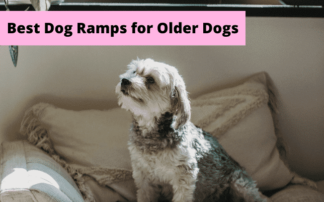 Picture of small dog with text overlay: best dog ramps for older dogs.